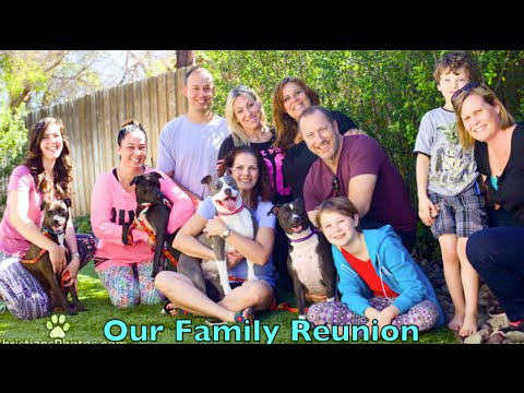 Mama Iris and pups 1 year Family Reunion  - Happily ever after.