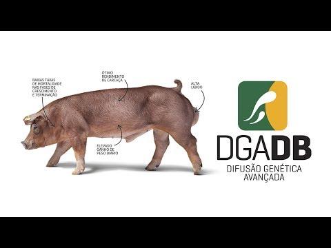 Unidade Difusão Genética Avançada | DB Genética Suína