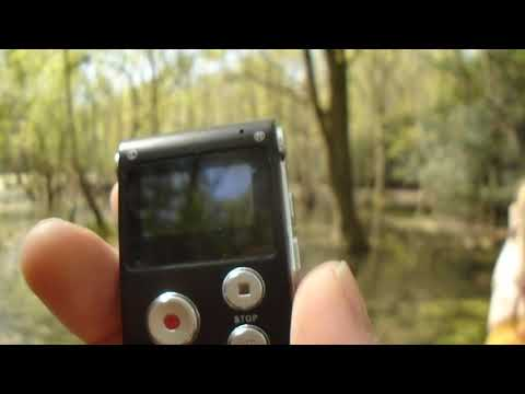 EPPING FOREST HAUNTED