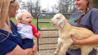 FUNNY Animals Trolling Babies and Kid 🐢🐇🐸 Funny Babies and Pets Compilation