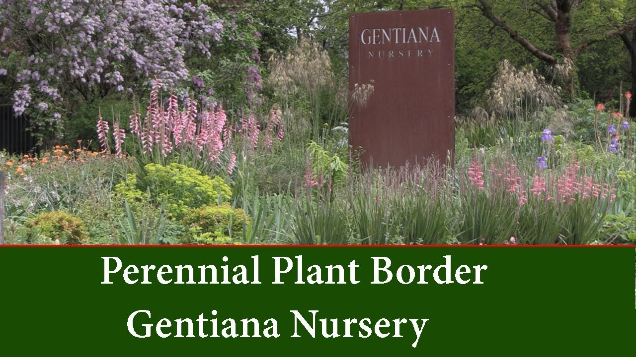 Perennial Garden Borders Planting Ideas And List Youtube