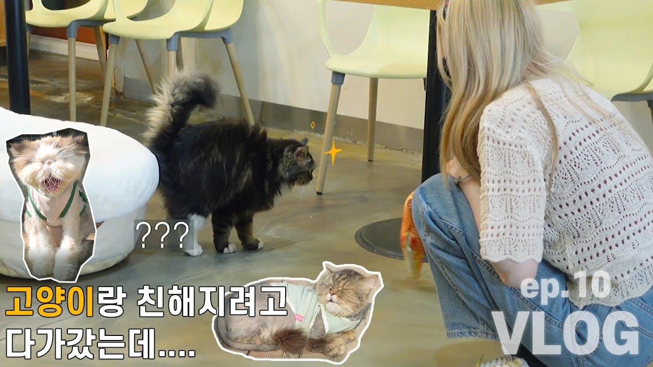 SUB)EP.10[VLOG] 고양이 카페 방문기!!! 고양이 보면서 힐링하기:) / 고양이랑 친해지려고 다가갔는데....