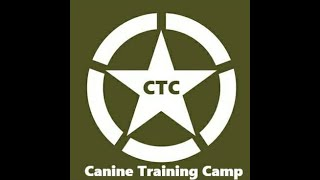 Dog training tips: Dog hyperactivity and focus!