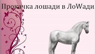 Как прокачать коня в Лоwади?-Все хитрости здесь!