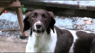 спасение собак 10 серия