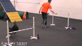 Westminster Agility Finals Inspired Course With Handling Analysis