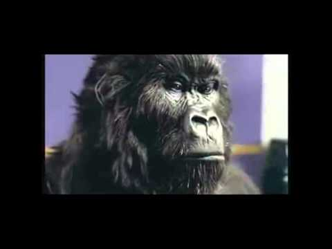 Gorilla Cadbury Advert - Europe - The Final Countdown