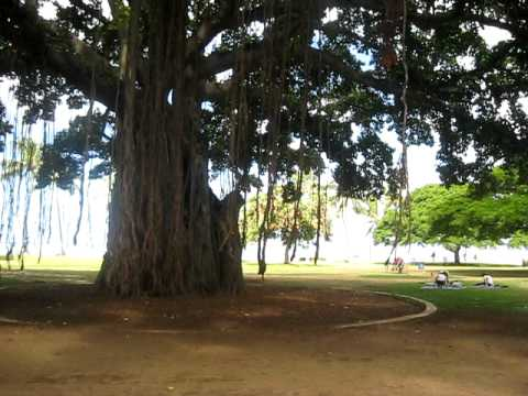 Swinging from a Banyan Tree in Hawai