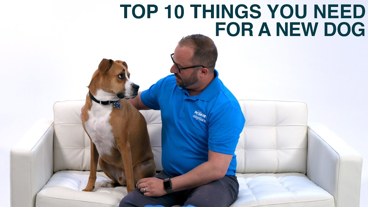 Things You Need For A New Dog Or Puppy Petsmart Youtube