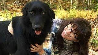 飼い主と散歩をしていた犬のカシュー。 マンホールの中に何かを見つけ、...