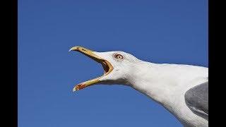 Seagulls.mov