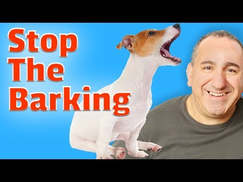 Stop your dog's excessive barking permanently without treats