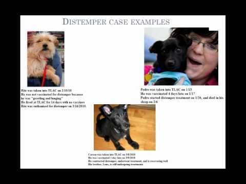 Treating Canine Distemper Virus