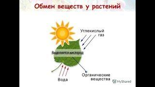 Обмен веществ у растений. Биология 6 класс