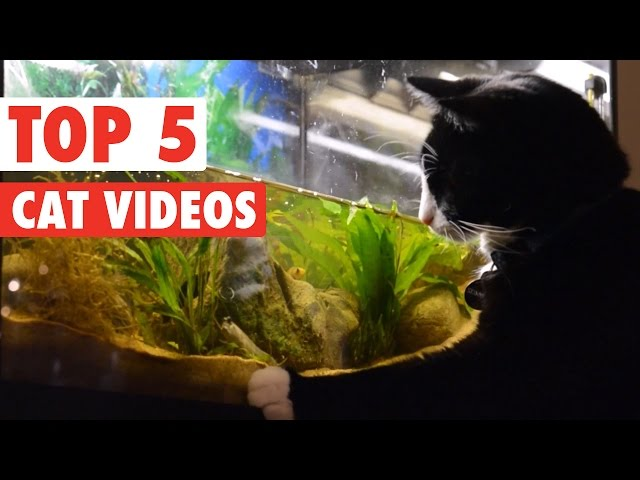 Amazing Cat Videos of the Week 2016