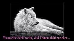 Sprüche und Zitate - Wahrheit und Lüge *❀*
