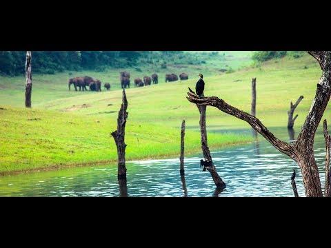 Thekkady wildlife sanctuary, Periyar Tiger Reserve - HD | munnar kerala tourism