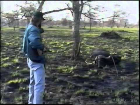 AMAZING Cape Buffalo Charge CLOSE CALL KILL !!!