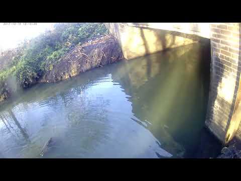 Perch Brent River
