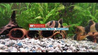 Cz.1- Akwarium  live- na żywo - Bocje , ryby denne.