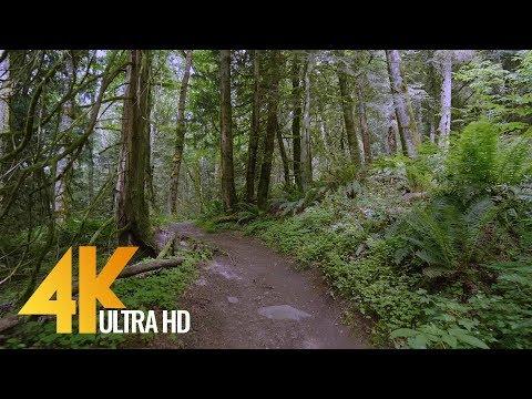 4K Virtual Forest Walk - 5 Hours Walking in the Woods, Grand Ridge Trail, Issaquah, WA