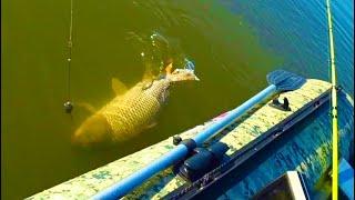 рыбалка на Дону 14 МИНУТ БОРЬБЫ ЛОМАЕТ И ГНЕТ