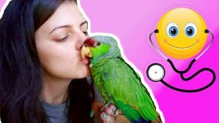 NURSING A BLEEDING AMAZON PARROT BACK TO HEALTH MYSELF | PART #2 | My Emergency Parrot Care