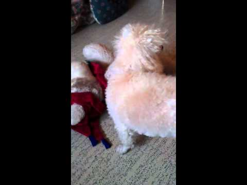 Gay dogs from YouTube · Duration:  1 minutes 4 seconds