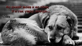 Не пинай меня, и не гони… Стих про собаку