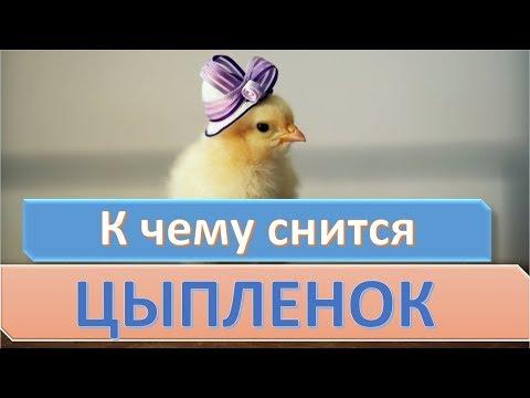 К чему снится цыпленок   СОННИК