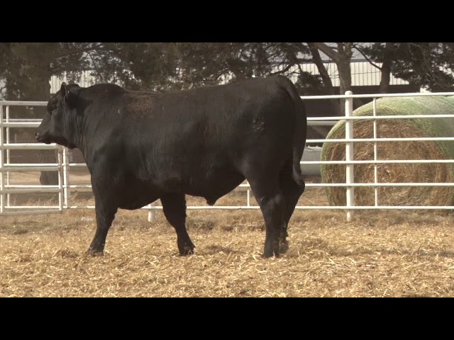 Express Ranches Lot 244