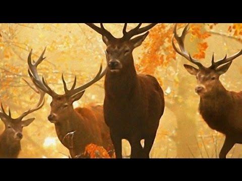 День заповедников и национальных парков