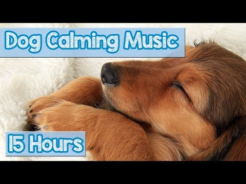 Relaxing Nature Sounds for Anxious Dogs! Calm Your Dog with this Natural Anxiety Remedy for Dogs! 🐕