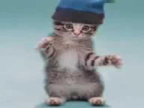 Dancing cats comp