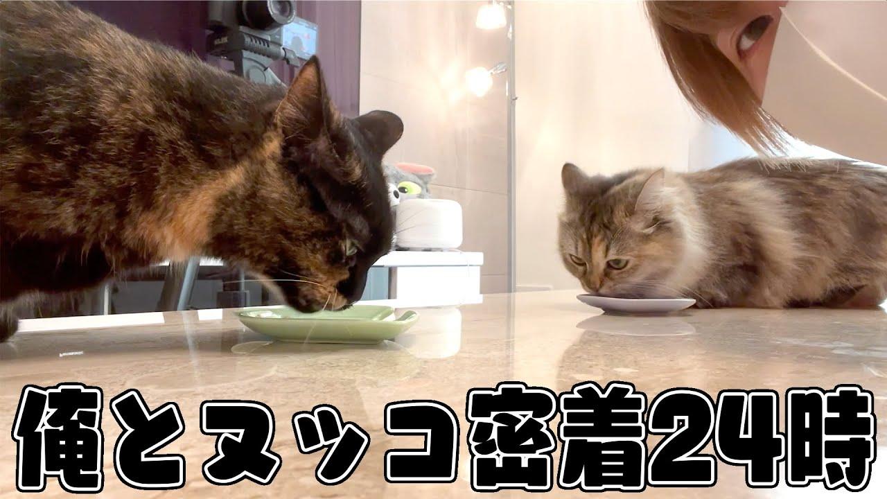 【実写】あっきぃと猫1日密着24時wwwww