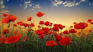 ОТКРЫТКА: С Днем Победы! Красивое музыкальное поздравление.