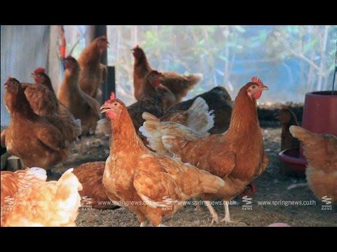 เศรษฐีเกษตร 8/3/58 : ฟาร์มเลี้ยงไก่ไข่อินทรีย์