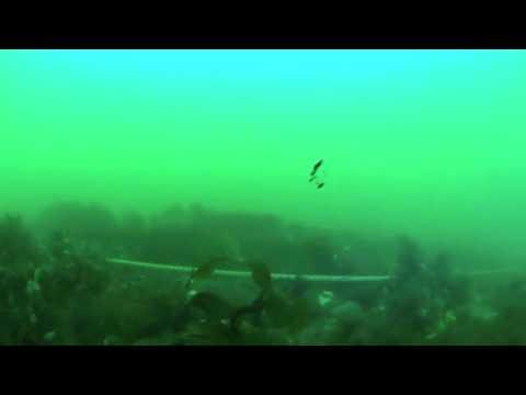 Reef Explorer III - MIT AUV Lab