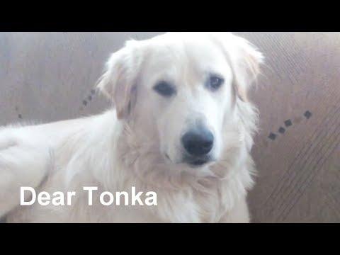 Dear Tonka I Happy dog Petko needs advice