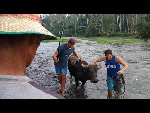 Carabao Riding Lesson in the Philippines - Across a River with a Carabao