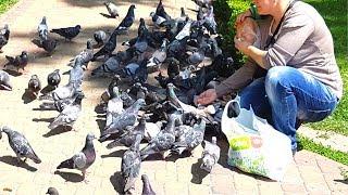 Добрые дела и животные. Женщина кормит голубей в парке