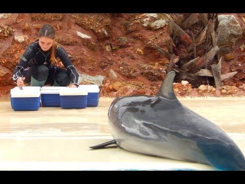 Γερμανικός οργανισμός καταγγέλλει το Αττικό Ζωολογικό Πάρκο για την παράσταση με τα δελφίνια