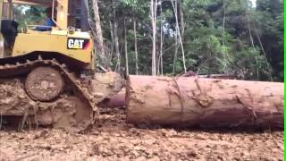 CAT D6R XL using winch pulling Big and Heavy Log part 01