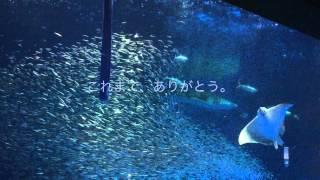 さよならユウユウ かごしま水族館