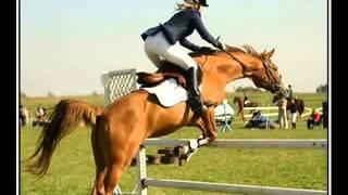 Потрясающие, самые красивые фото пород лошадей
