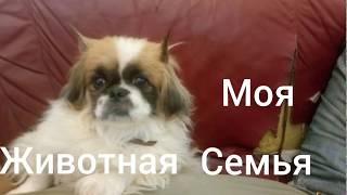Интересные истории про кошек и собак(моя животная семья 7-ое видео)