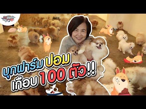 หม่าม้าบุกฟาร์มปอม เล่นกับสุนัขเกือบ 100 ตัว - วันที่ 24 Feb 2020