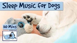 Help Your Dog Sleep Like A Baby!