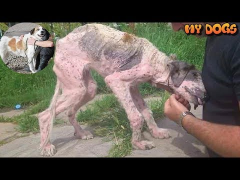 Poor Dog's Amazing Transformation After Rescue on Street