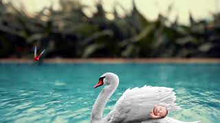 Baby lullaby songs go to sleep, Relaxing Sleep Music, Bed Time Lullaby for Sweet Dream